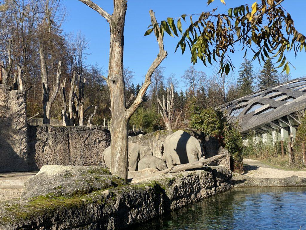 Bild der Elefanten im Zoo Zürich