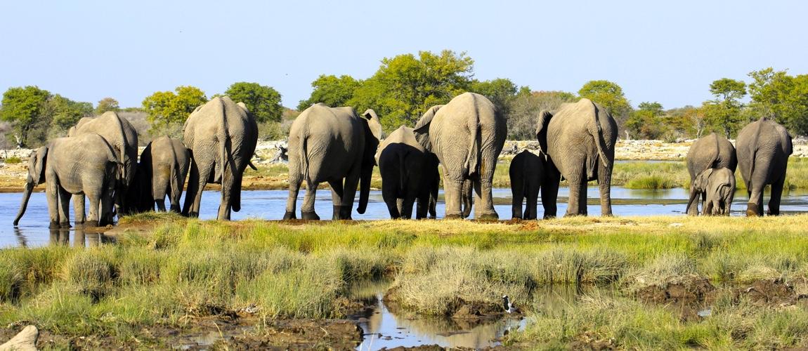 Inpakijst Namibië en Botswana dit is wat je mee moet nemen op safari in Afrika