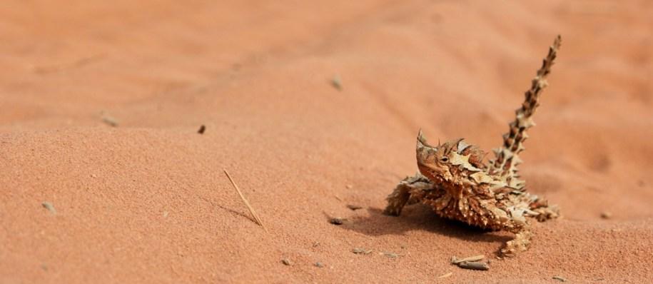 unieke dieren in australië