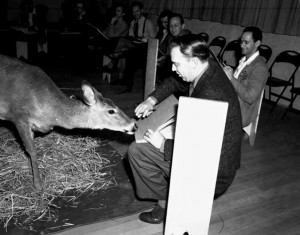 Bambi behind the scenes