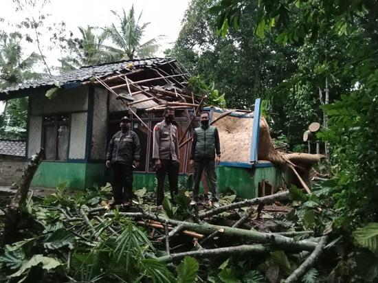 Tertimpa pohon tumbang, rumah Mak Iih rusak berat (Foto: Purwanda/dara.co.id)