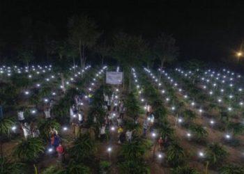 Tak hanya hadir menerangi rumah-rumah warga, PLN juga membawa cahaya ke kebun buah naga di NTT melalui program program Tanggung Jawab Sosial dan Lingkungan (TJSL) (Foto :Vice President Komunikasi Korporat PLN)