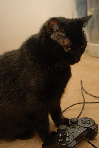 cat controller_Throcket Luther
