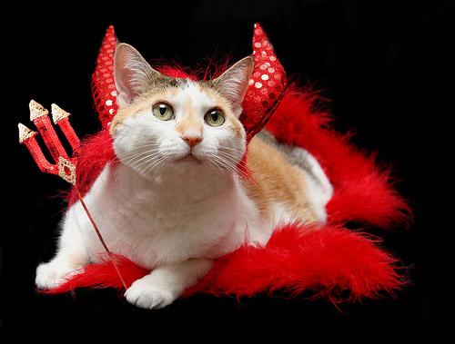 devil cat_geckoam