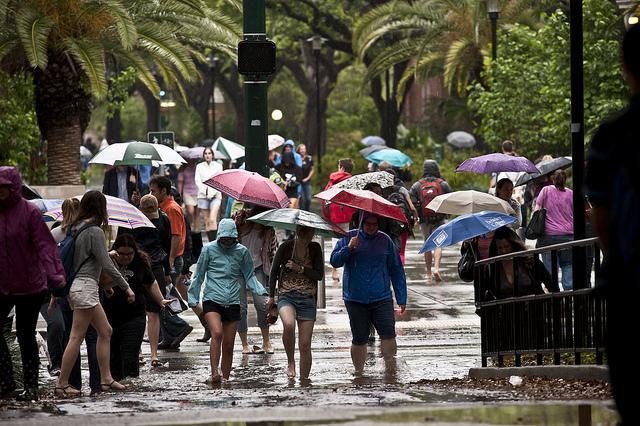 umbrellas_Tulane Publications