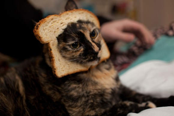 cat bread_pinguino k