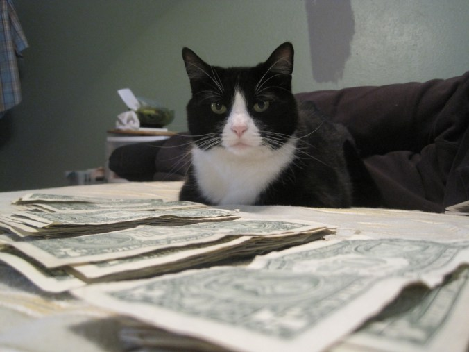 cat money_amanda