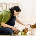 Important Things to Keep in Mind before Commence a Pet Sitting Business