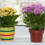 5 Unusual Flowering Houseplants that Are Easy-to-Grow