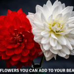 7 Mystical Flowers you can add to your Beauty Regime