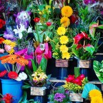 The Most Popular Flowers Used in Flower Shops