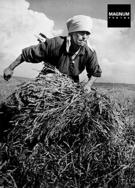 UKRAINE. August, 1947. Woman gathering a bundle of hay on a collective farm