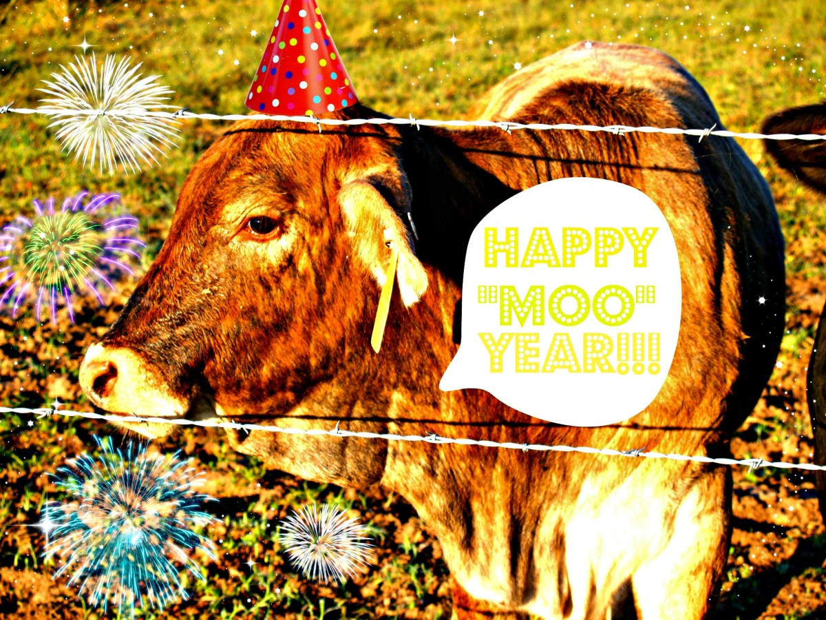 "Happy ""Moo"" Year!!! – New year New site"