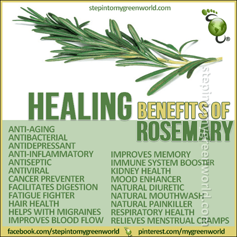 healing properties of rosemary