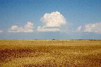 cumulus_clouds_over_yellow_prairie2.jpg