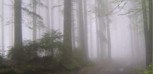 Darius Tred - Piccoli enigmi nascosti nel bosco