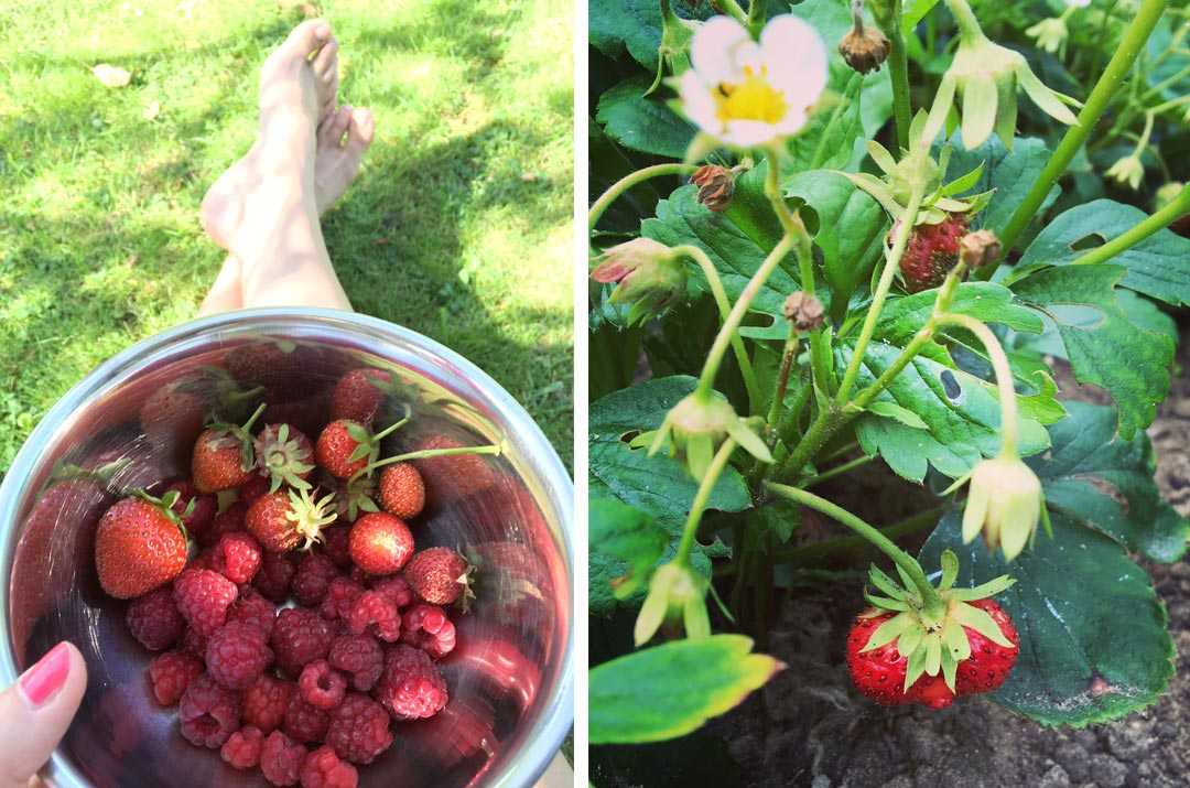 Erdbeer Himbeeren aus dem Garten. Foto