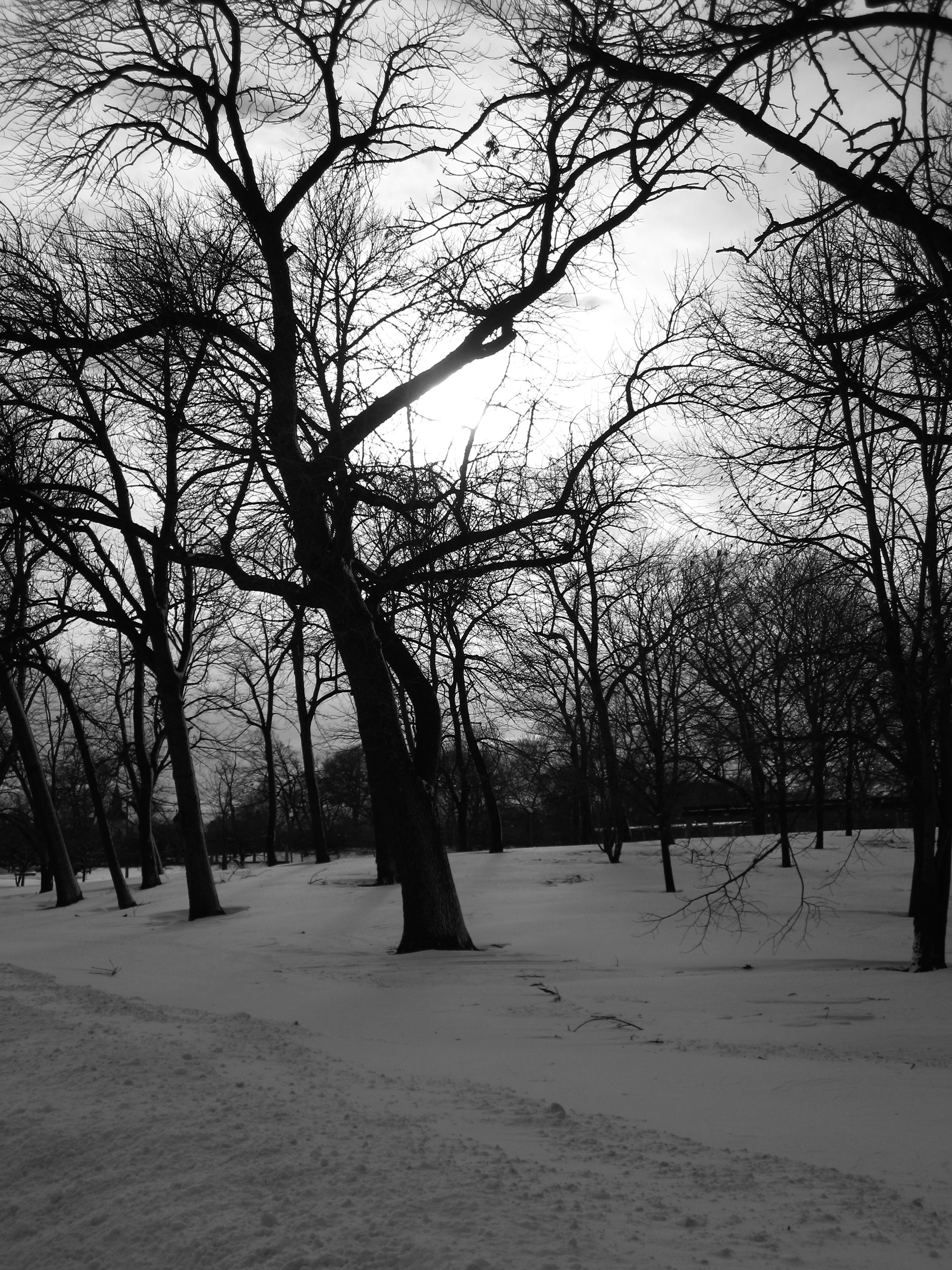 Winter trees in Humboldt Park, Chicago IL