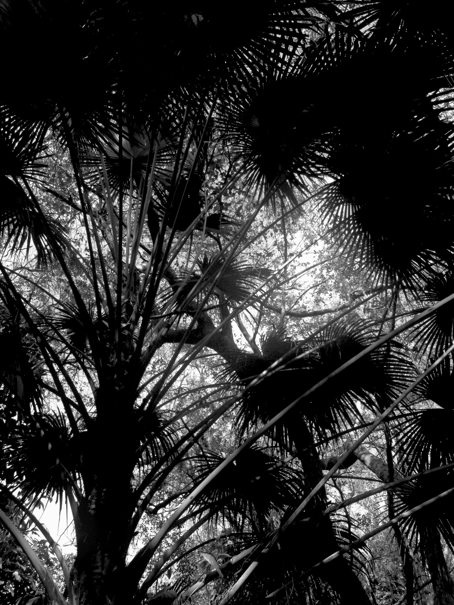 Palm trees in Miami, Florida / Darker than Green
