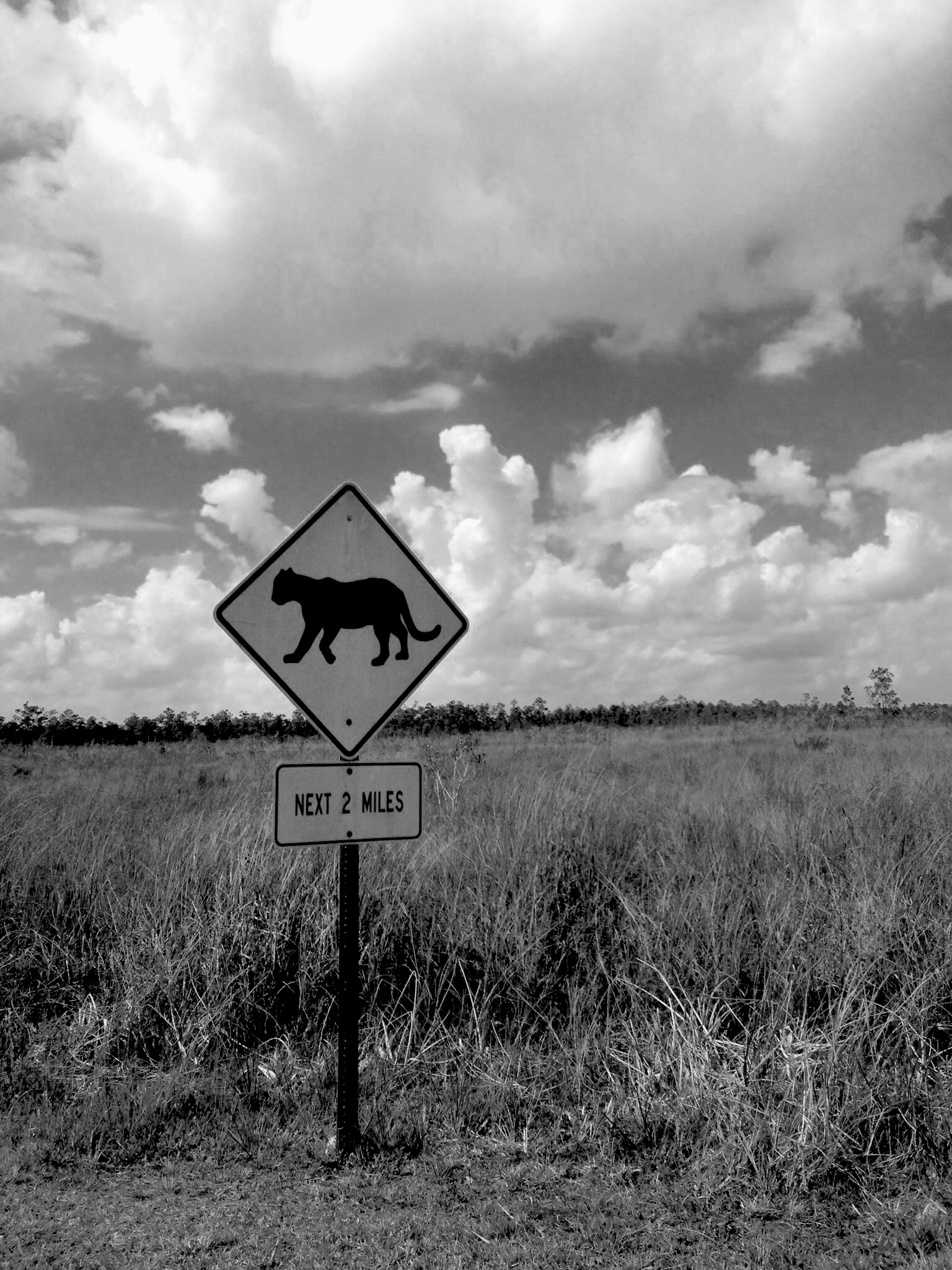 Panther Crossing sign on the way to Everglades National Park, Florida / Darker than Green