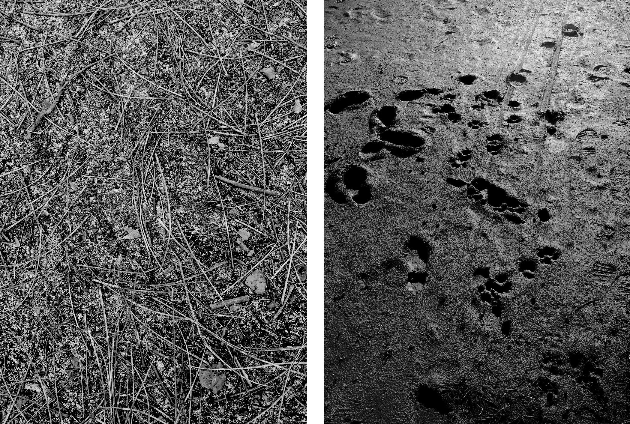 The ground in Welles Park, Chicago Illinois / Darker than Green