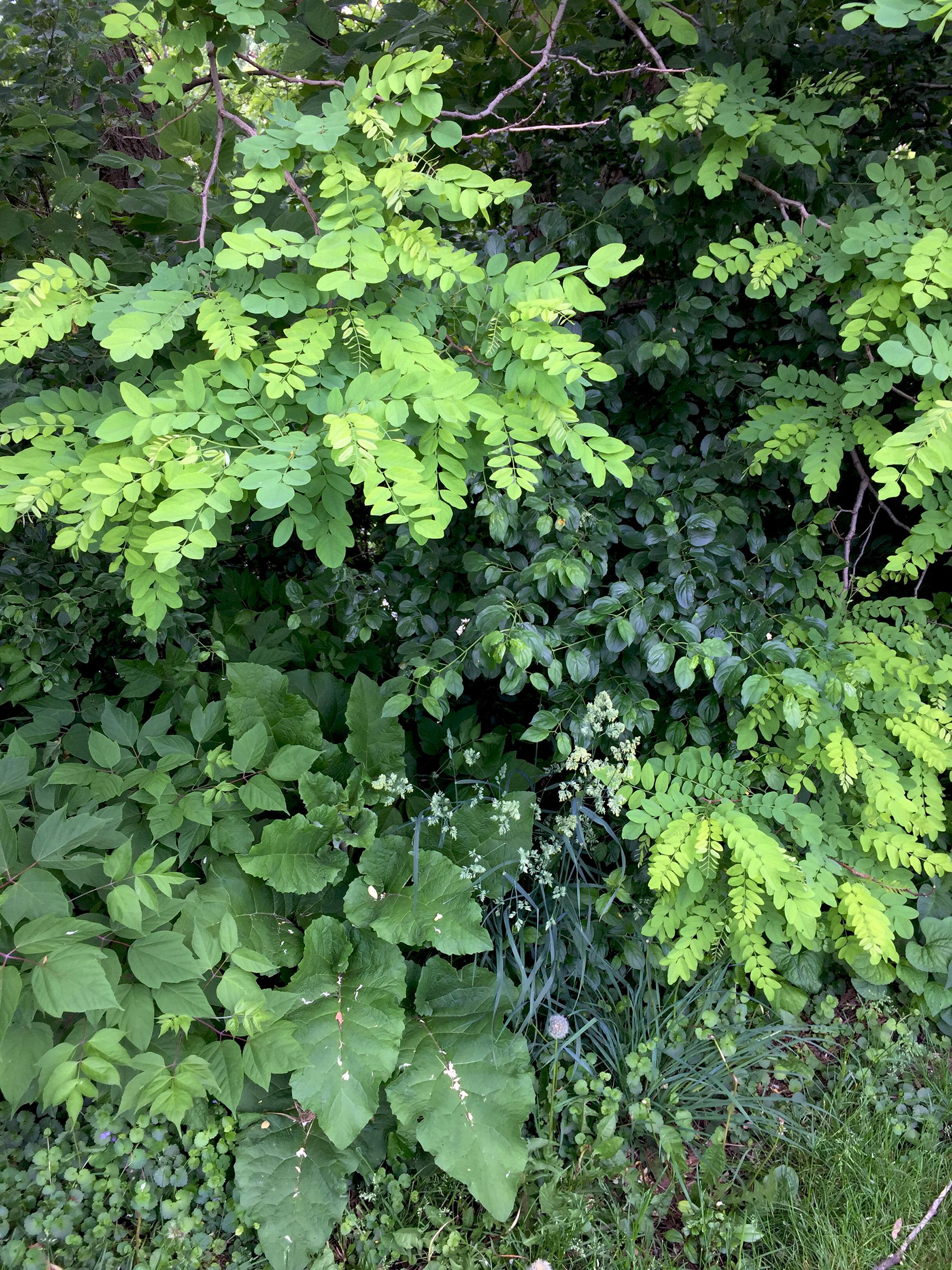 Foliage in Clark Park, Chicago / Darker than Green