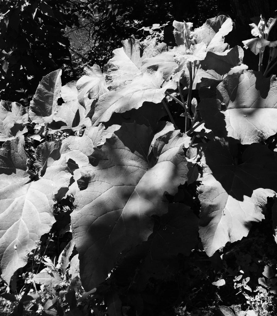 Weeds / Darker than Green