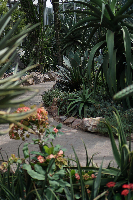 Desert House At The Chicago Botanic Garden / Darker Than Green