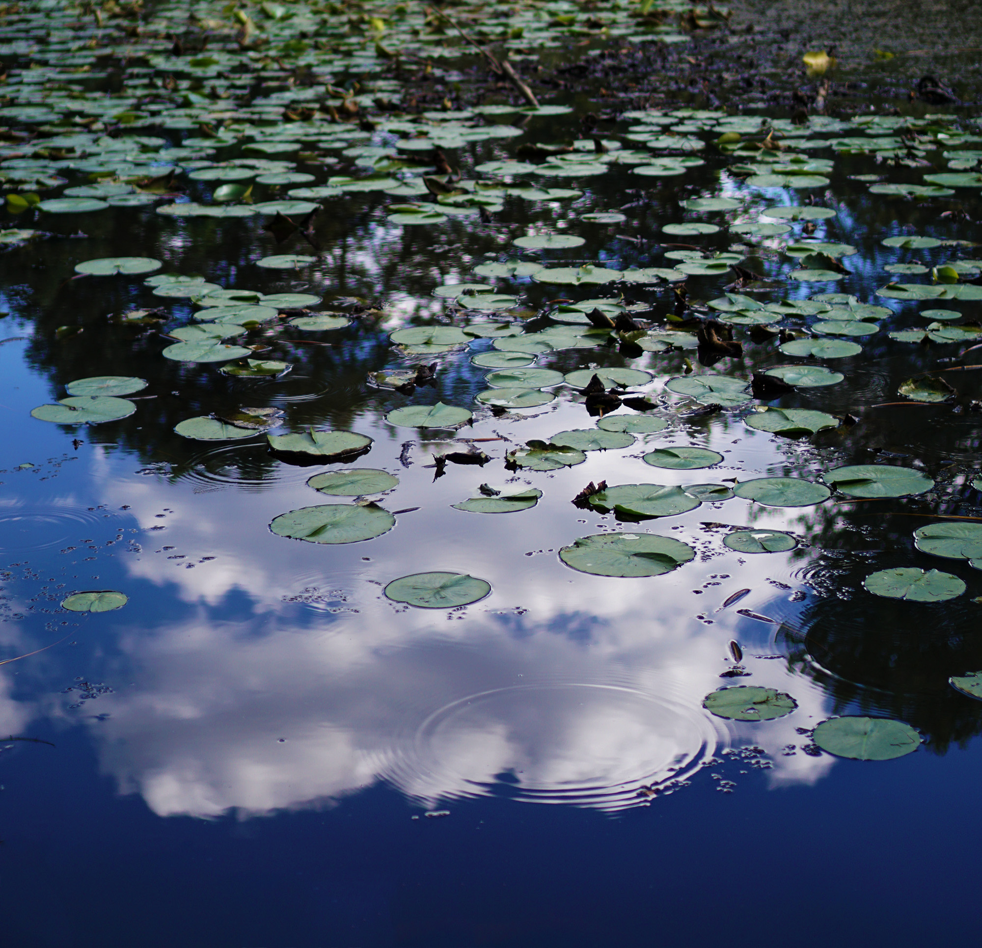 Cloud reflecting in the pond, North Park Village Nature Center / Darker than Green