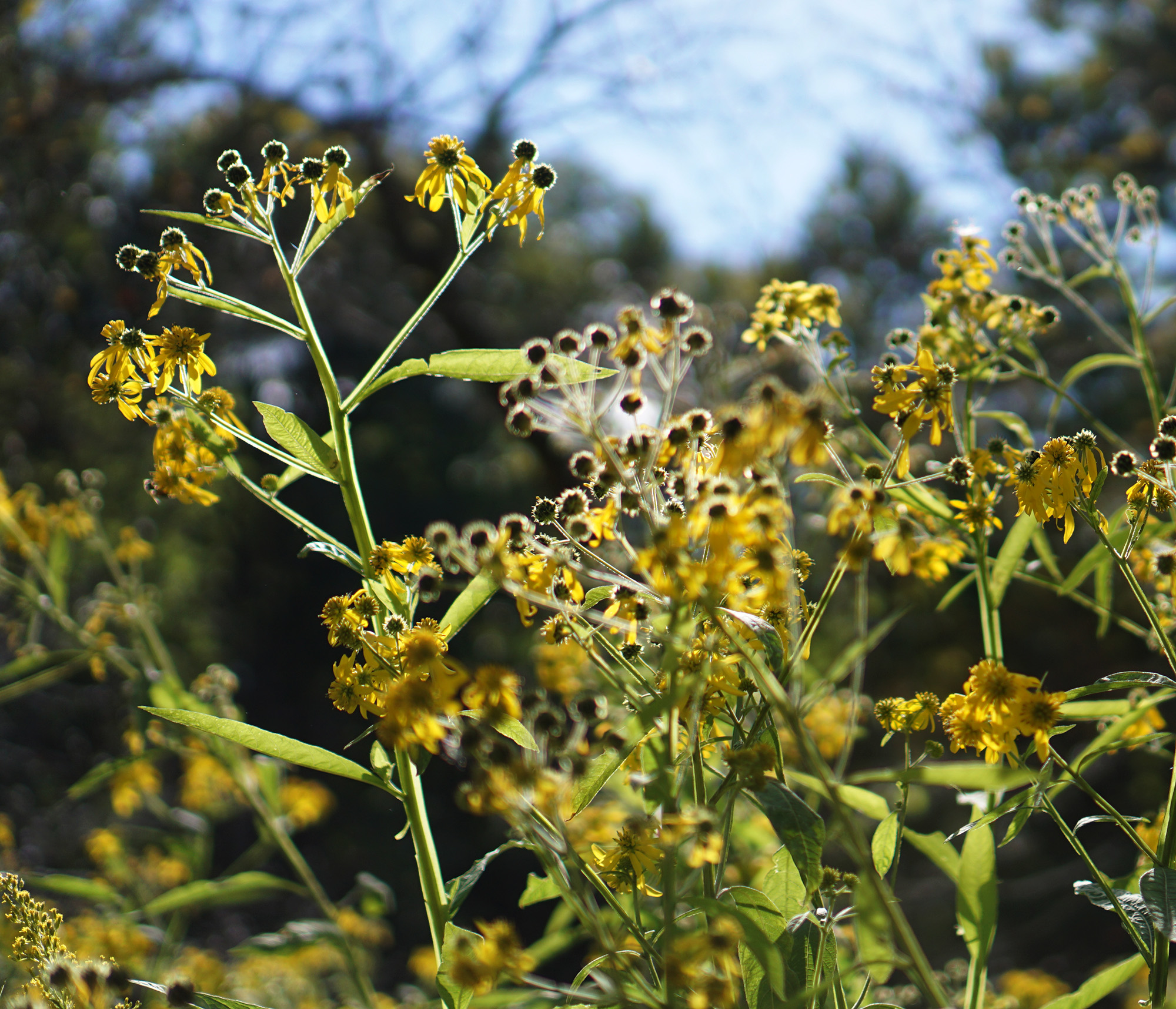 Wildflowers, North Park Village Nature Center / Darker than Green