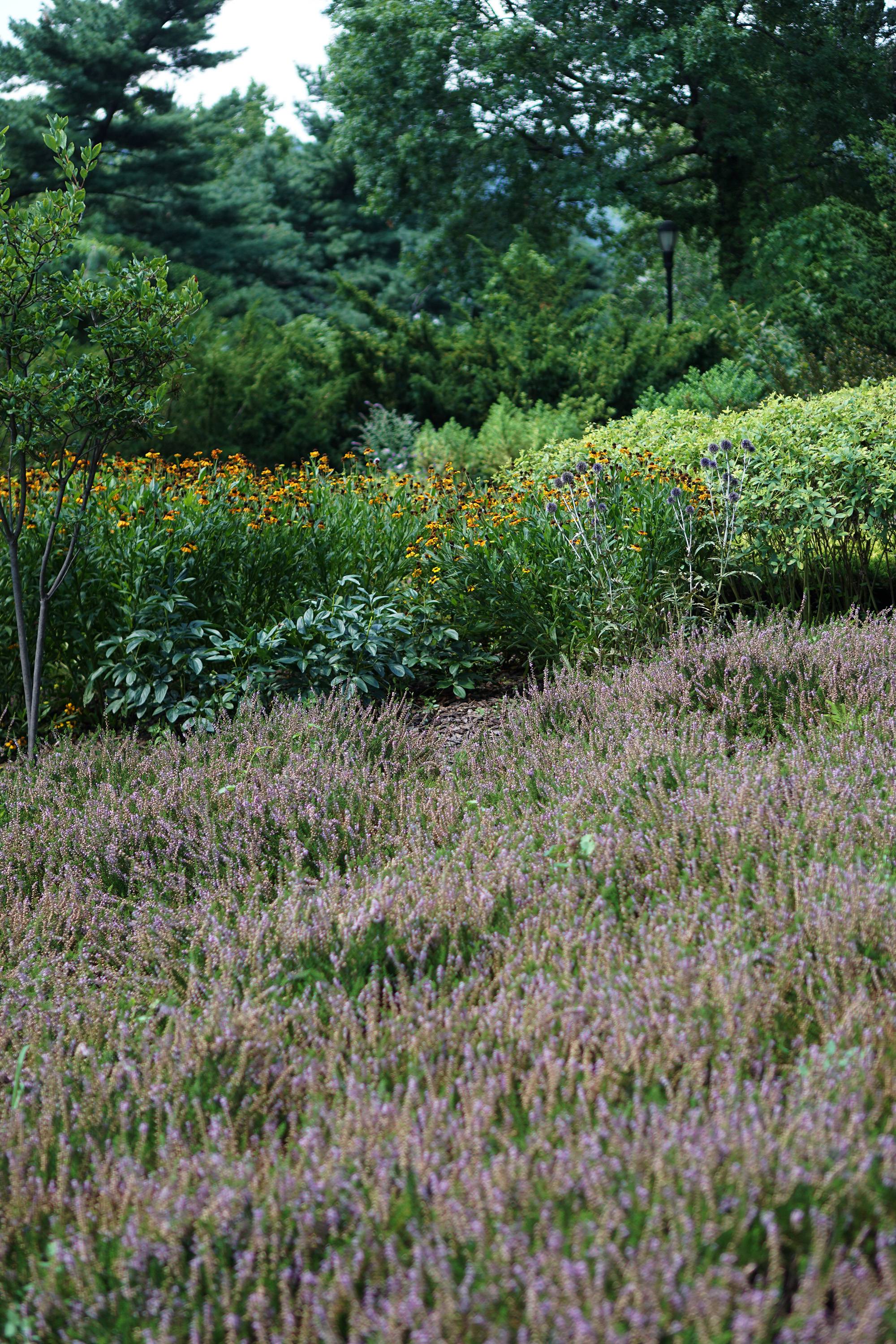 Heather Garden in Fort Tryon Park, Washington Heights, NYC / Darker than Green