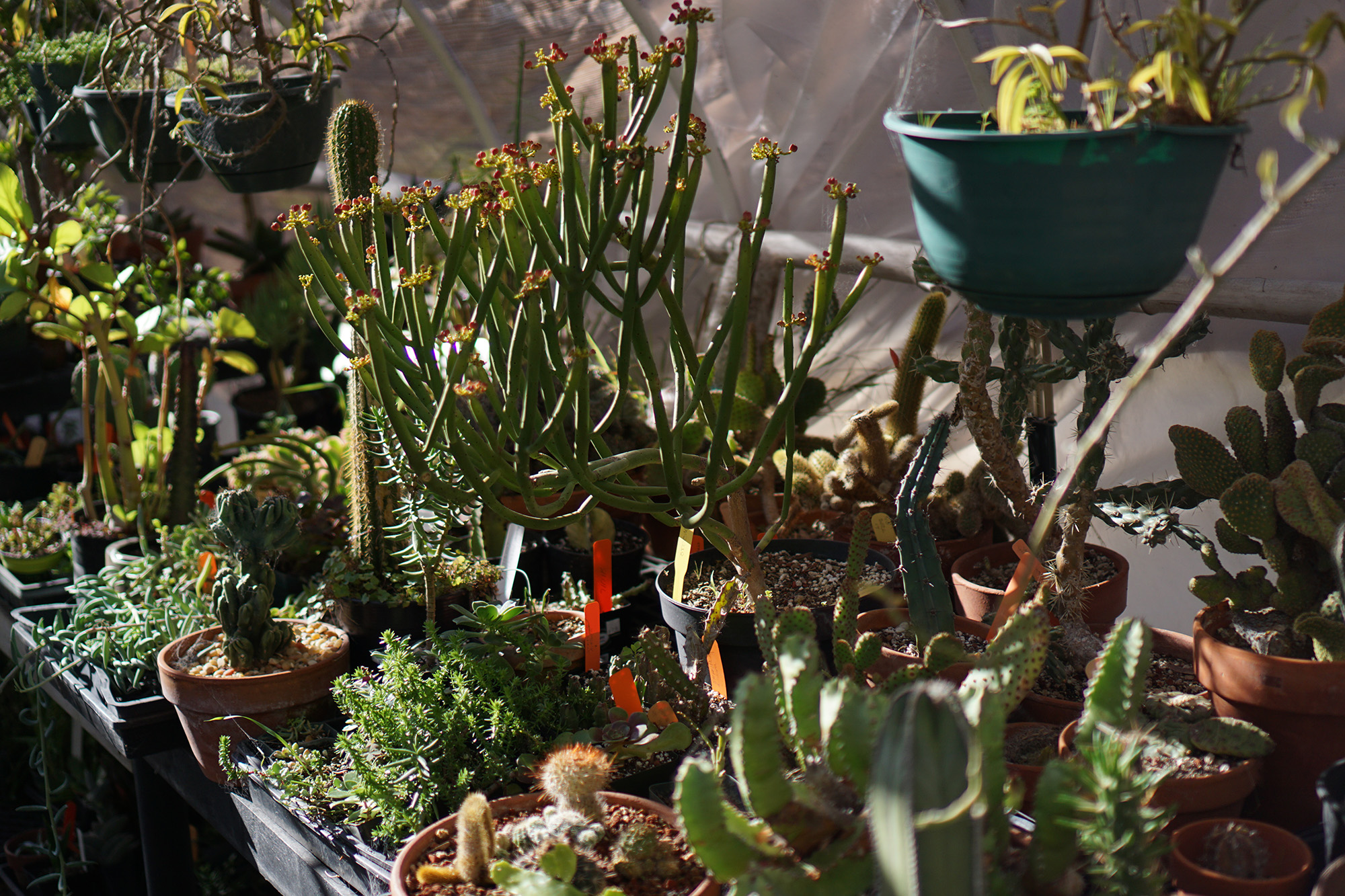 Succulents in a hoop house, San Francisco Botanical Garden / Darker than Green