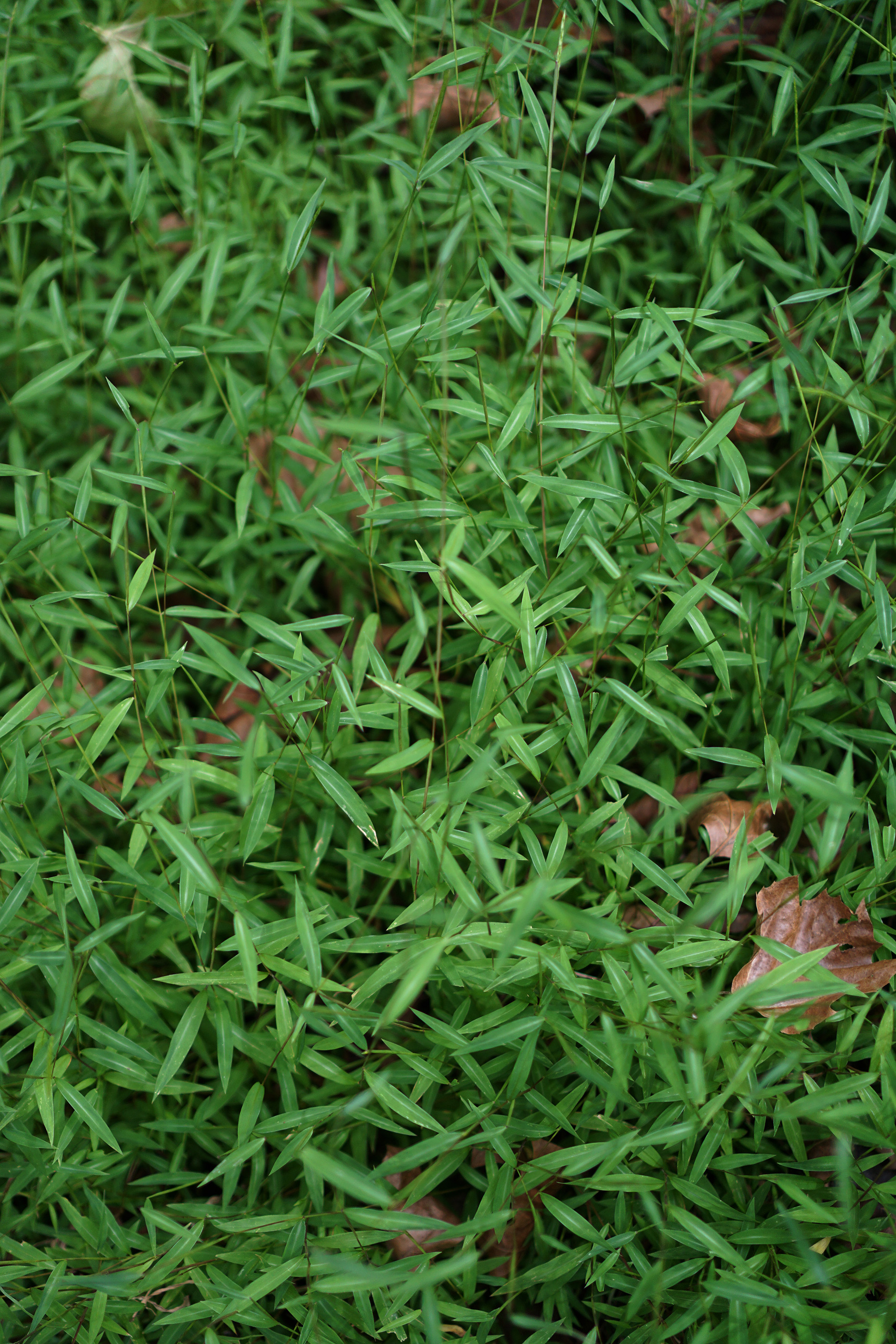 Green groundcover, Patapsco Valley State Park, Maryland / Darker than Green