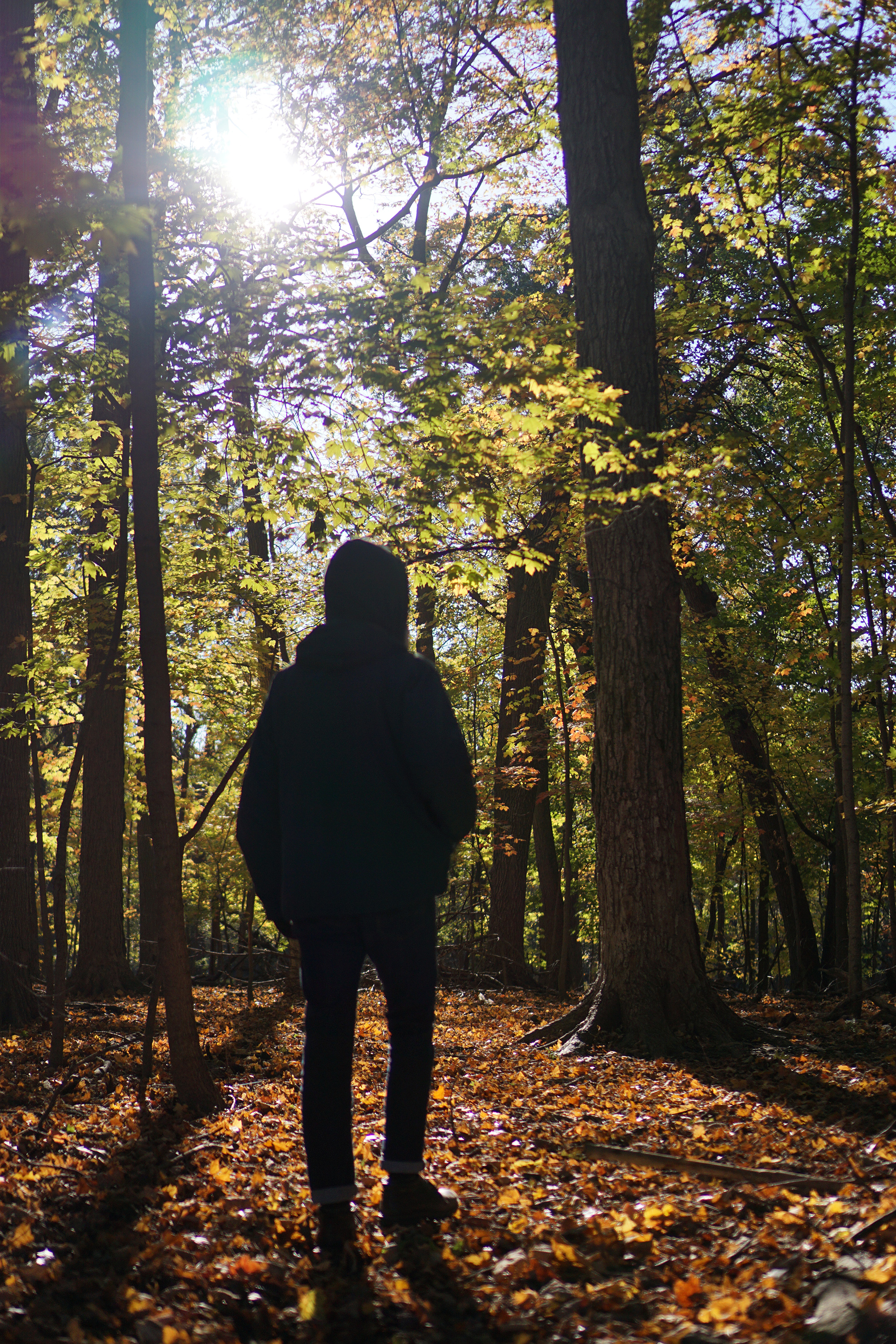 Man silhouetted against fall foliage in Miami Woods, Morton Grove Illinois / Darker than Green