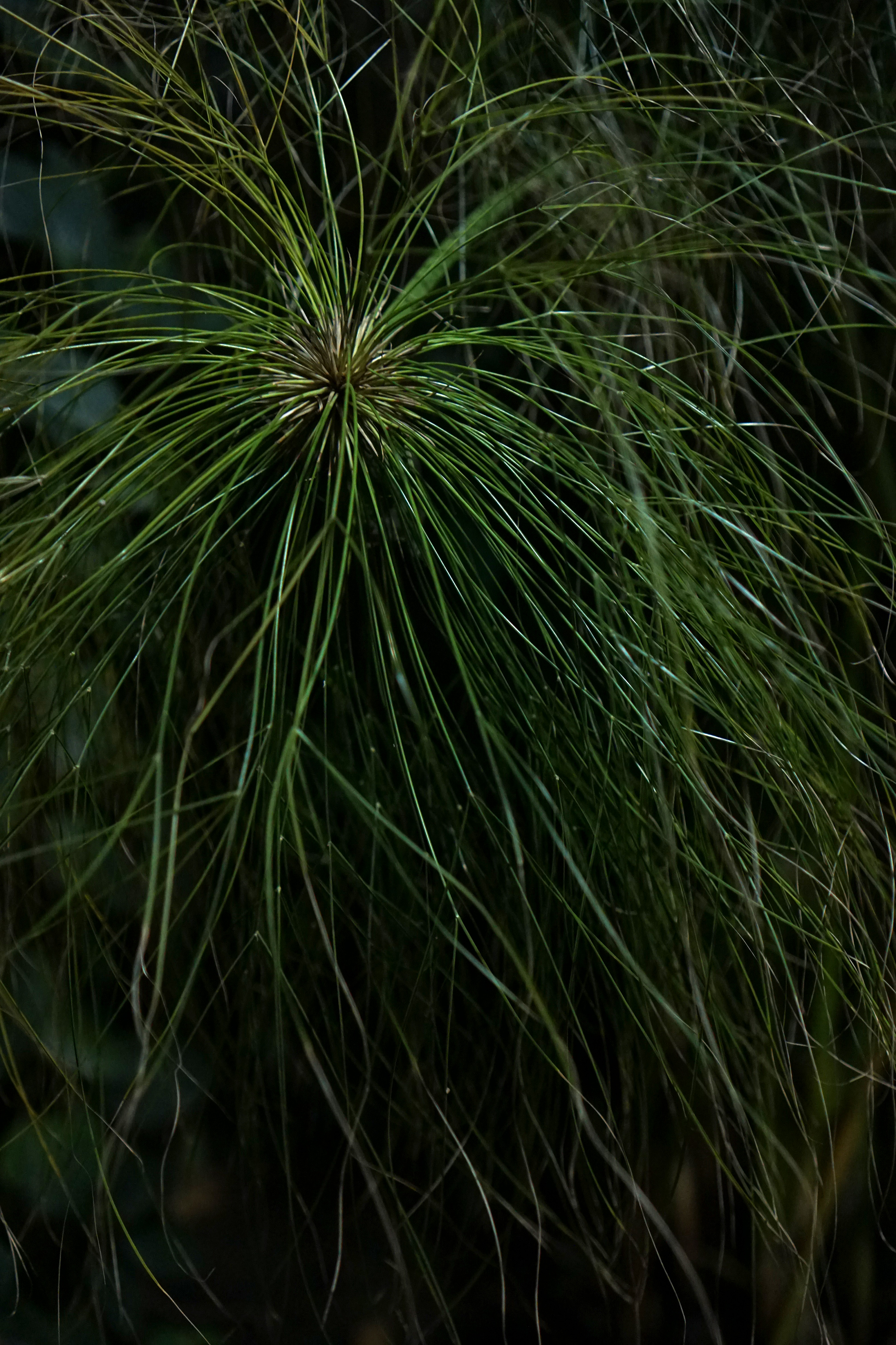 Papyrus, Garfield Park Conservatory at night, Chicago / Darker than Green
