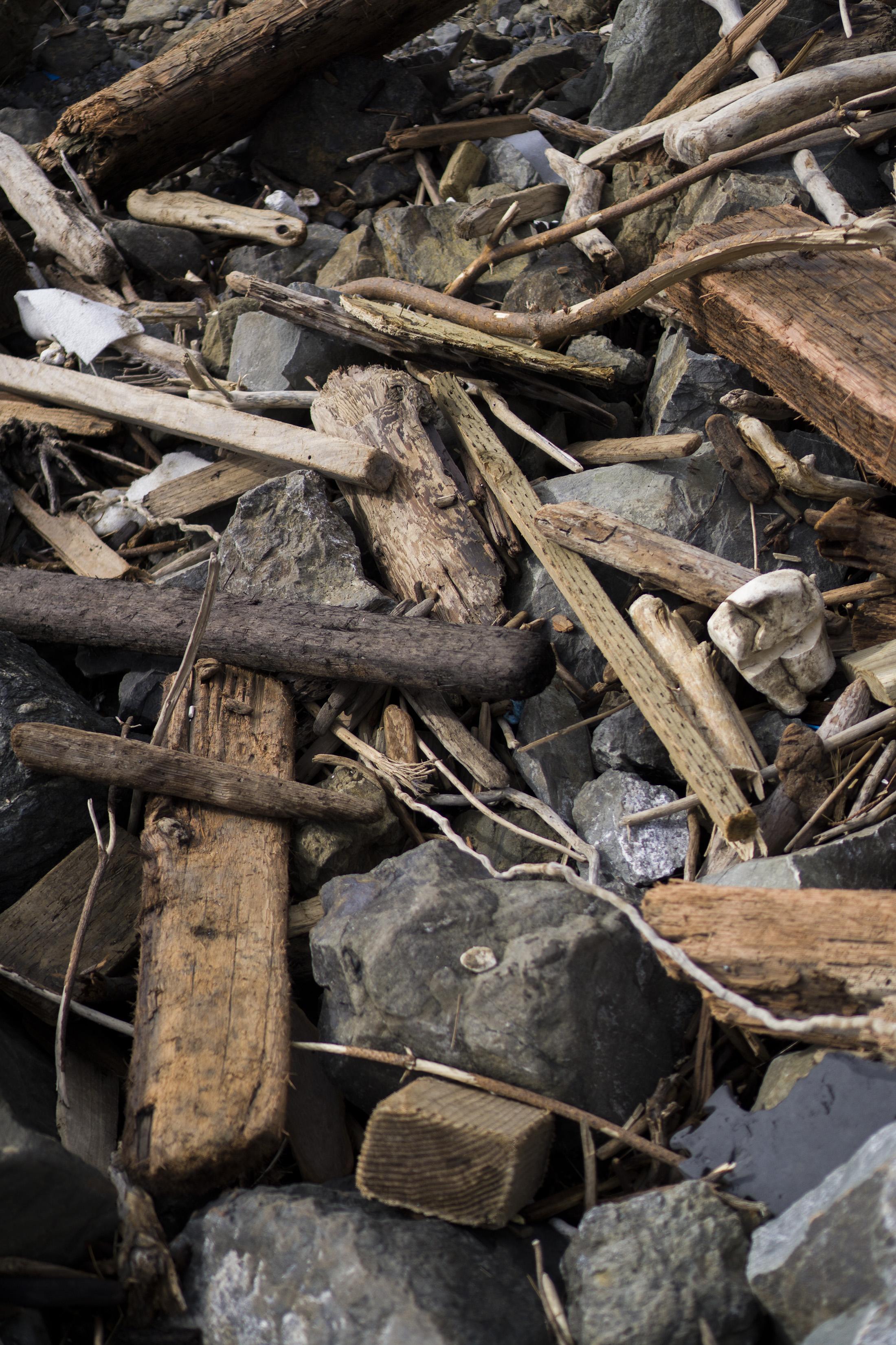 Detritus at Pirates Cove, Marin Headlands, Golden Gate National Recreation Area / Darker than Green