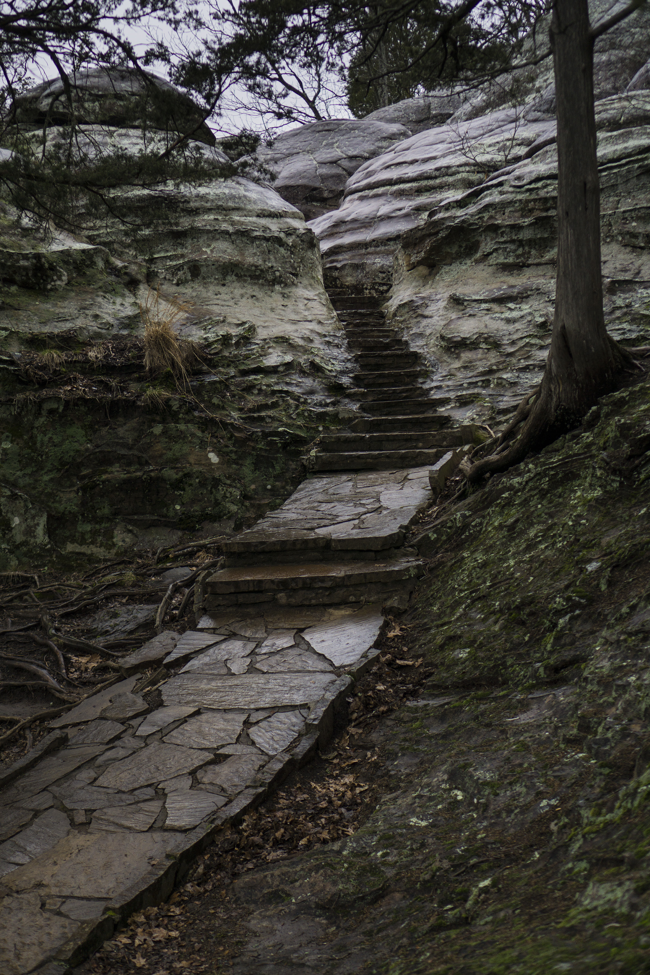 Rainy path along Observation Trail, Garden of the Gods, Shawnee National Forest, IL / Darker than Green
