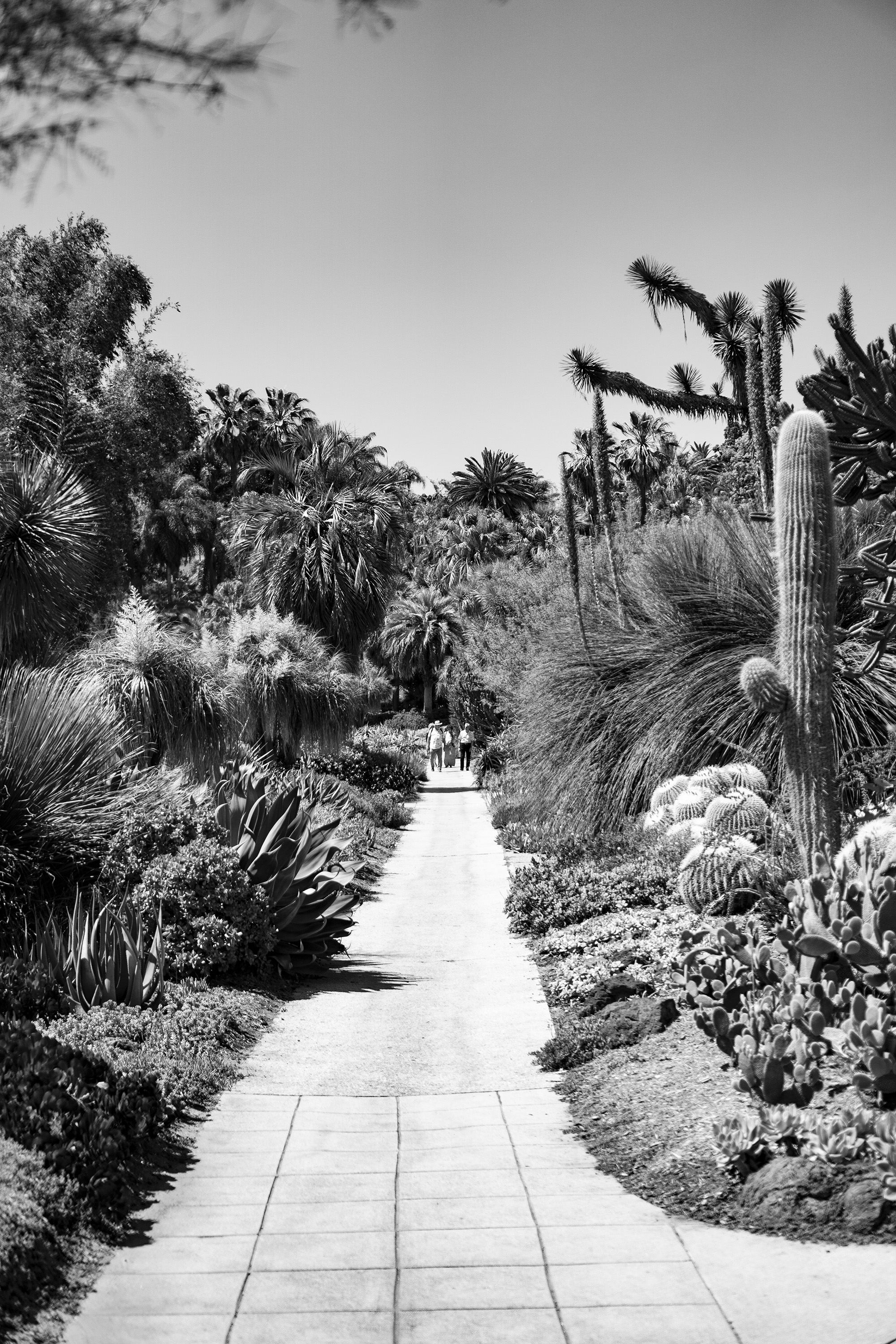 Center view of the path in the Desert Garden, Huntington Library, San Marino CA / Darker than Green