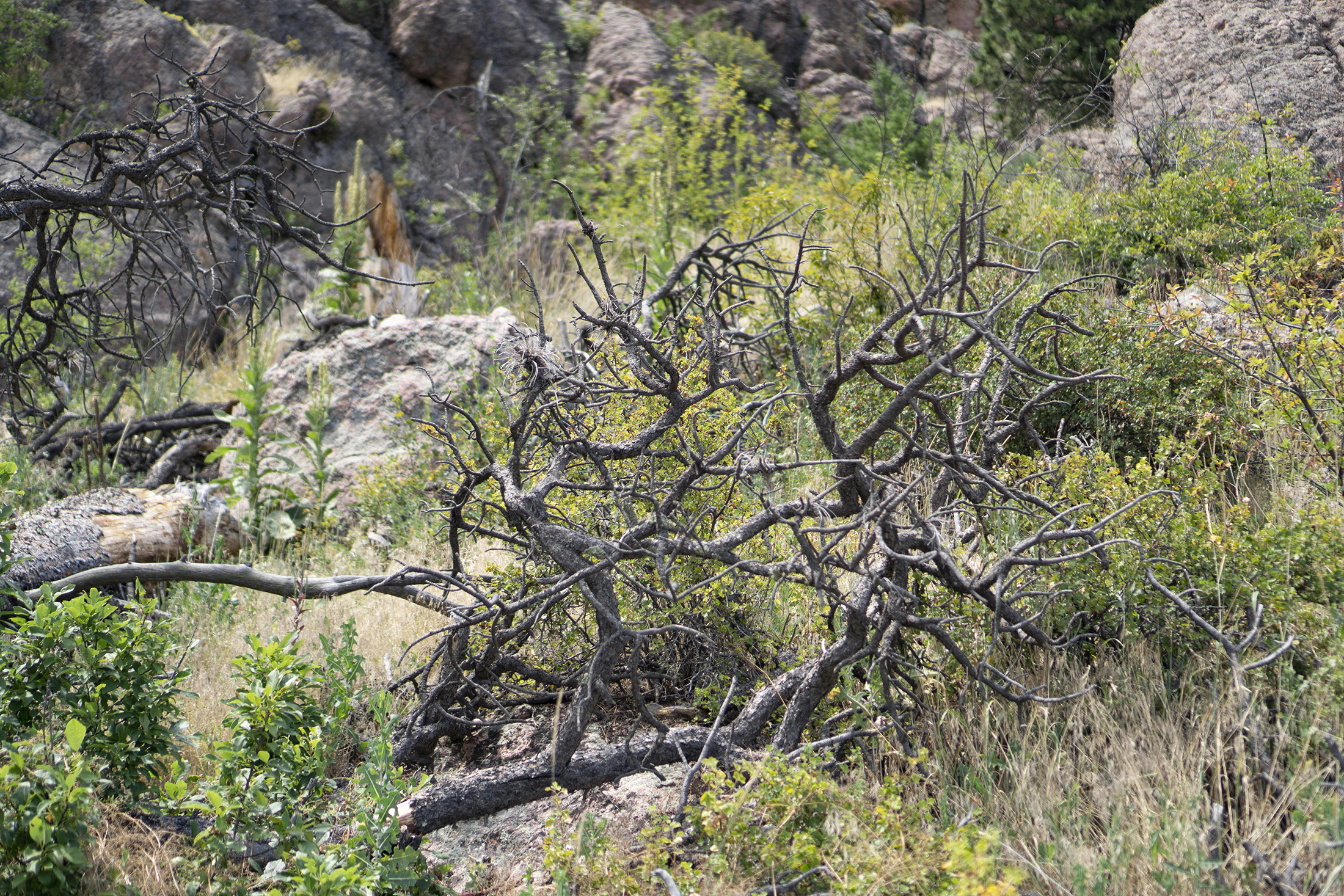 Bare branches along Horsetooth Rock trail, Colorado / Darker than Green