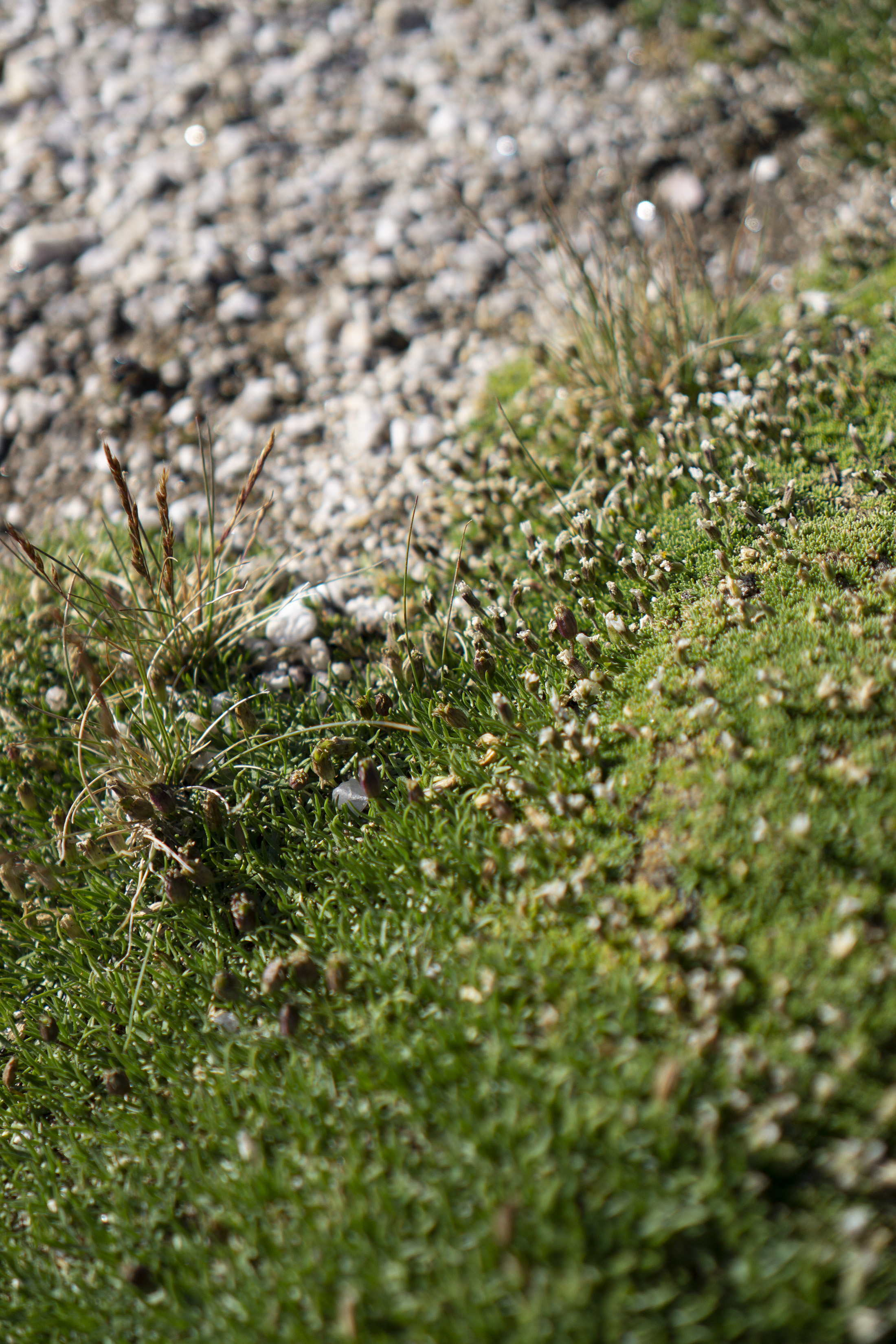 Tiny tundra plants, Rocky Mountain National Park / Darker than Green