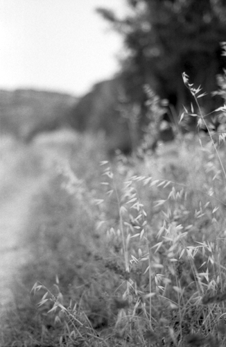Country side, Ilford Delta 100, Darkroom Malta, Developing, 35mm Film, Alan Falzon,Pentax
