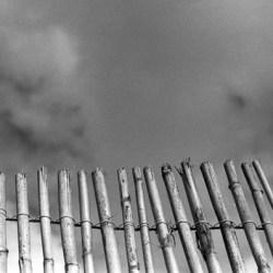 Bamboo, Ilford HP5, Darkroom Malta, Valletta, 35mm Film, Black and White