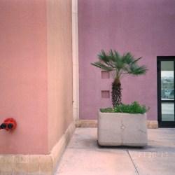 Kodak Color Plus 200, 35mm, C41, Film Photography, Film Developing