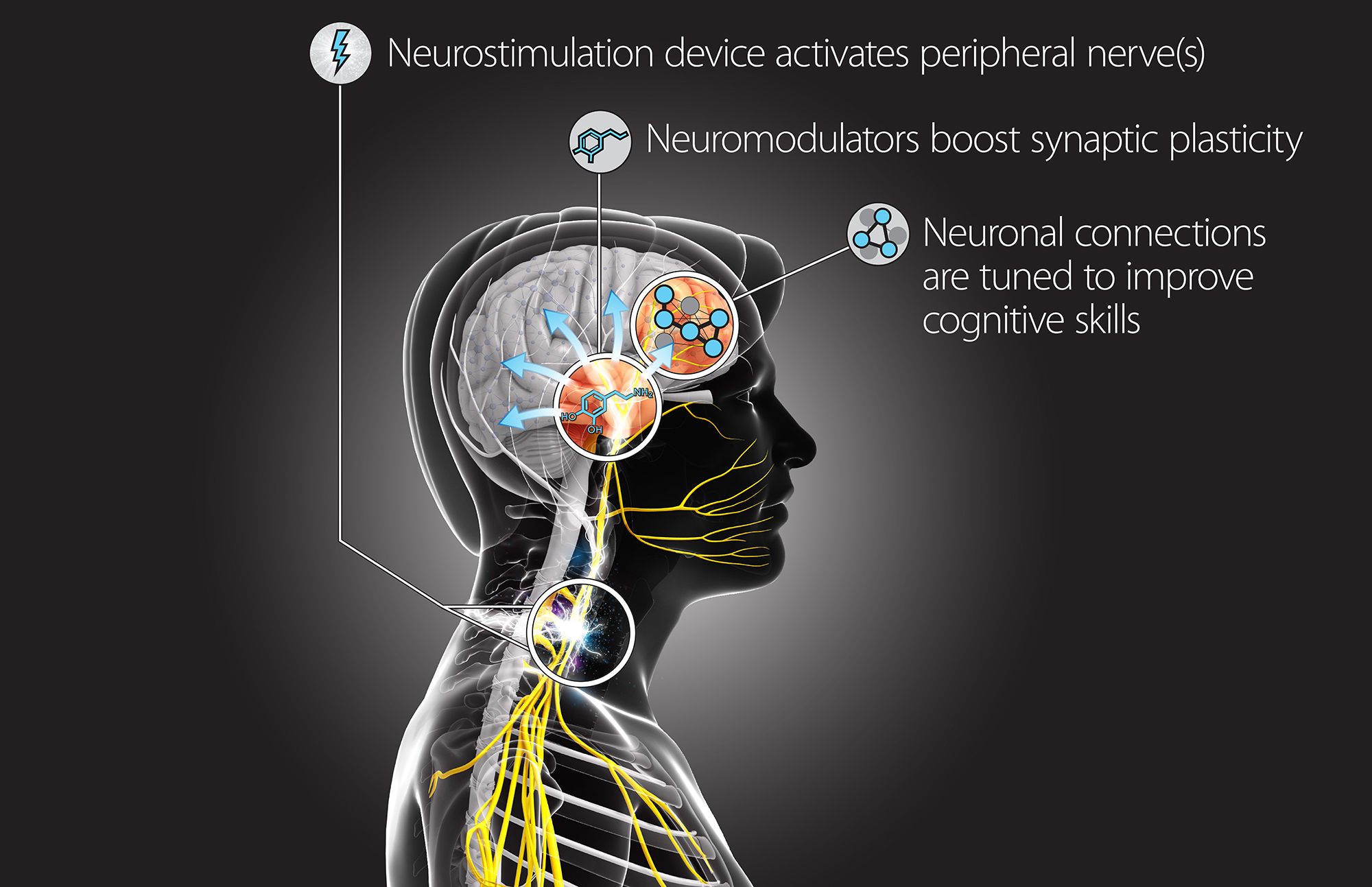 Darpa To Back Research On Peripheral Nerve Stimulation To