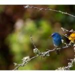 A dash of blue by Shreeram MV