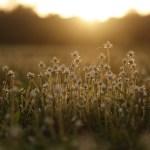 Grass flowers by Vineet Panchbhaiyye