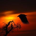 Twilight by Vinodh Ve