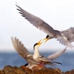 Wings by Shreeram MV