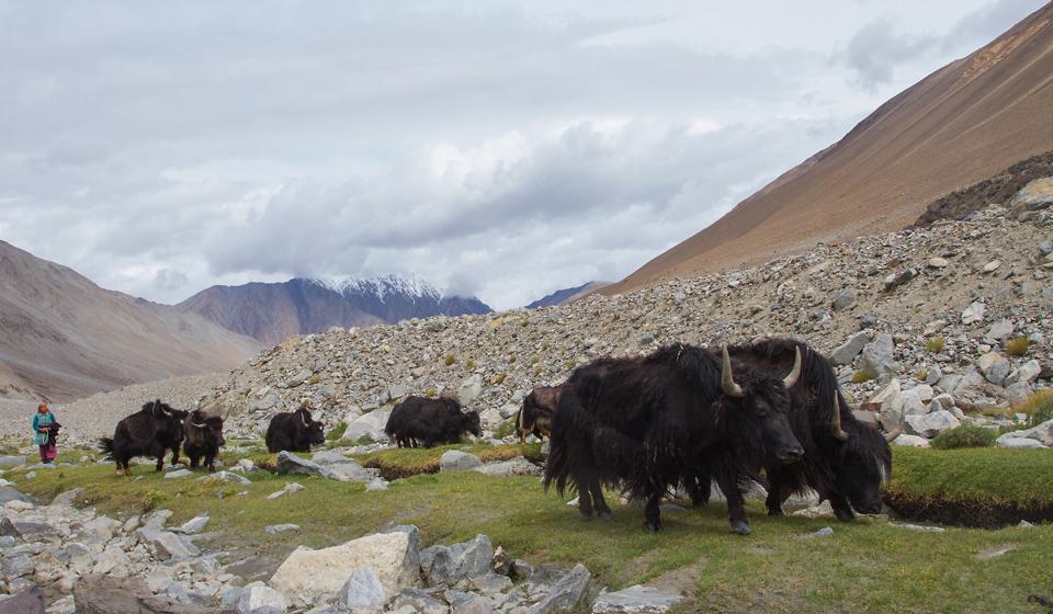 Ladakh_New_01