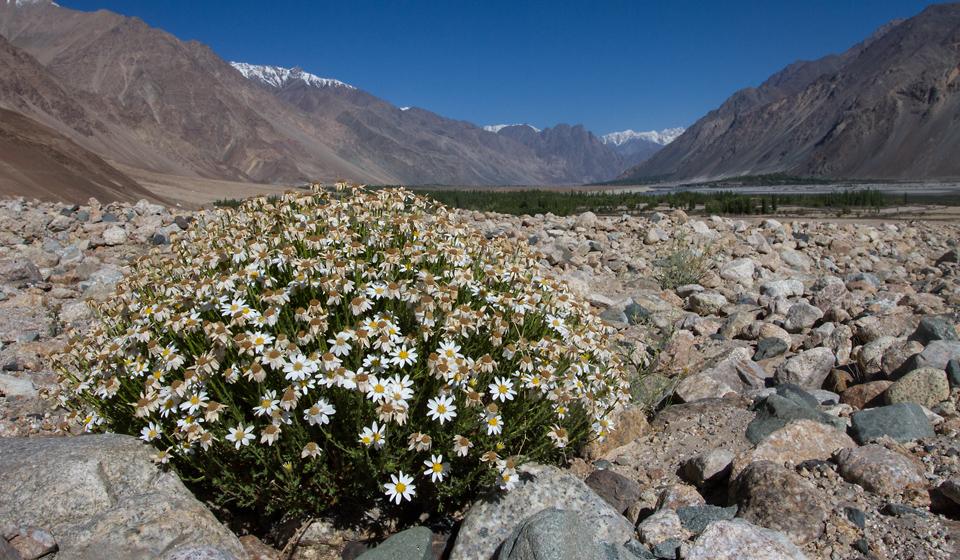 Ladakh_New_03-1
